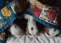 Make money online from quilting - puppies